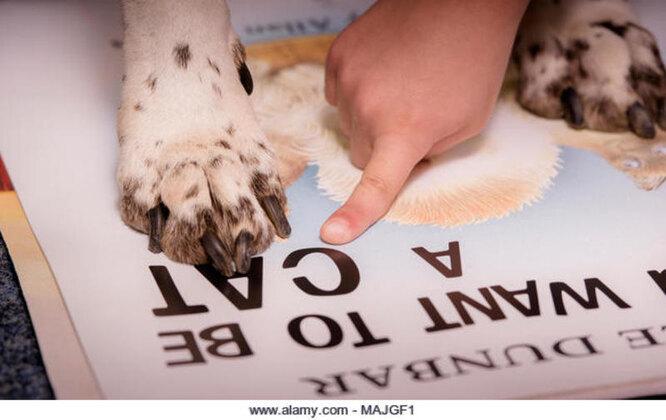 чтение с собакой