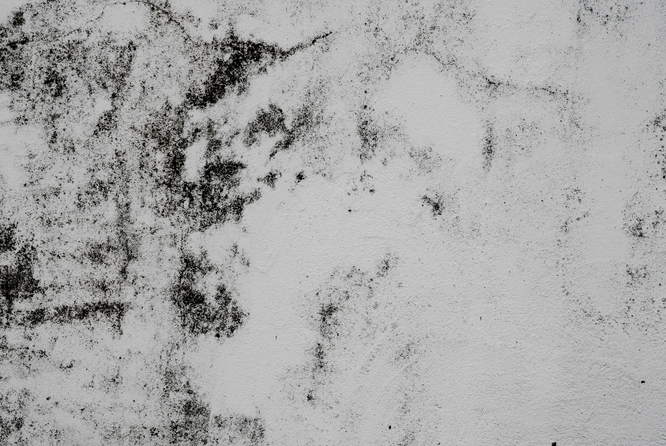 Плесень на стене. Photo by Annie Spratt on Unsplash
