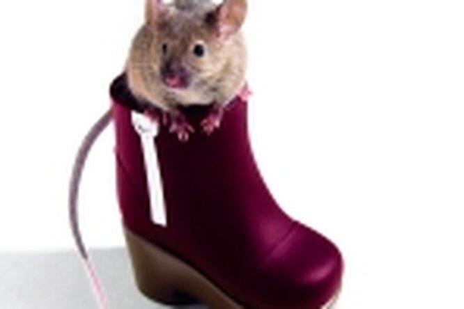 Мышка — отличный домашний питомец.
