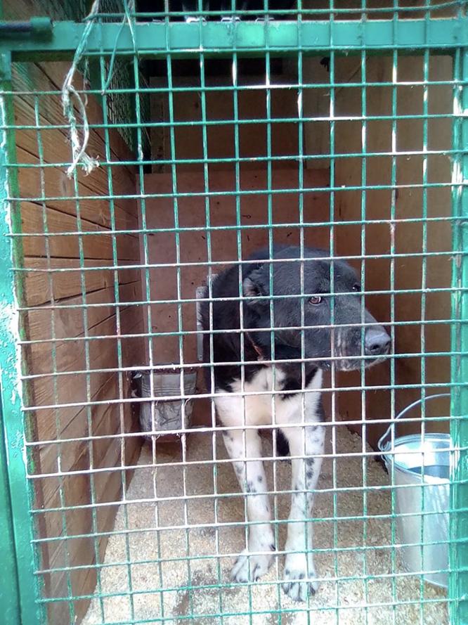 Илай, собака из приюта в Бирюлево