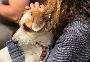Сотни людей провели праздничный день в приюте, утешая собак во время фейерверков