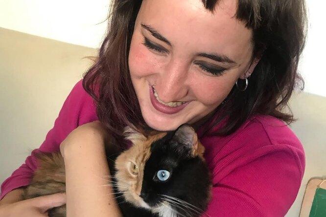 Какие милые химеры: удвуликих кошек появился свой аккаунт