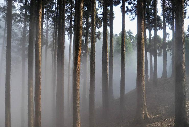 Лес Доу Хилл, Индия