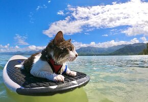 Хокулеа – приютский кот, который открыл в себе неожиданную страсть к серфингу