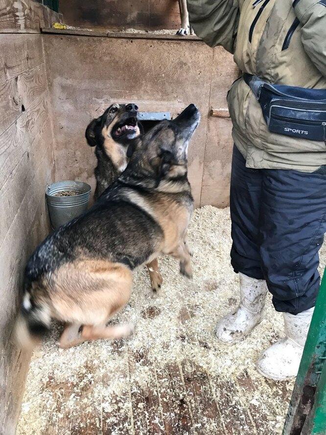 Ласкуша и Любимчик – брати сестра. Фото предоставлены волонтерами приюта и опекунами собак