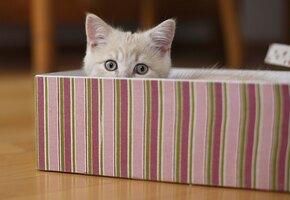 Больше не секрет: ученые объяснили, почему кошки любят сидеть в коробках