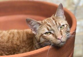 Кот Мило был в тяжелой депрессии, пока хозяйка не принесла ему котенка