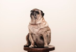 «Ей пришлось как следует поработать»: диета приютской собаки обошлась в 2 млн