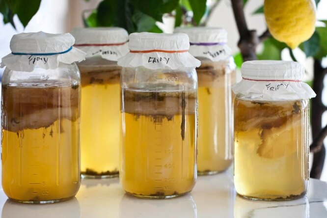 Чайный гриб: как растить, отчего применять