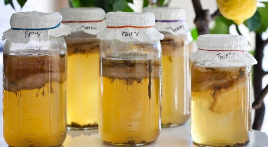 Бабушкин питомец. Чем полезен чайный гриб?