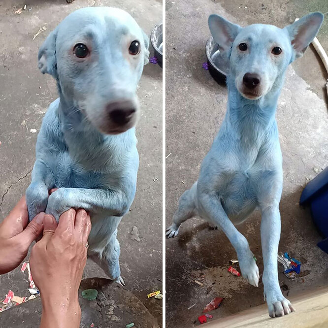 Стиль - это все для модной собаки!