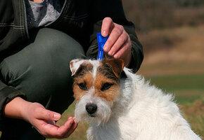 Сезон клещей: 6 эффективных средств для защиты животных от блох и клещей