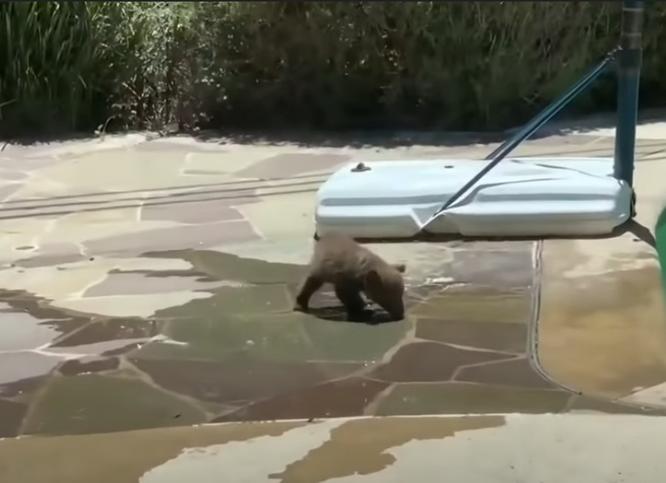 медвежонок возле дома