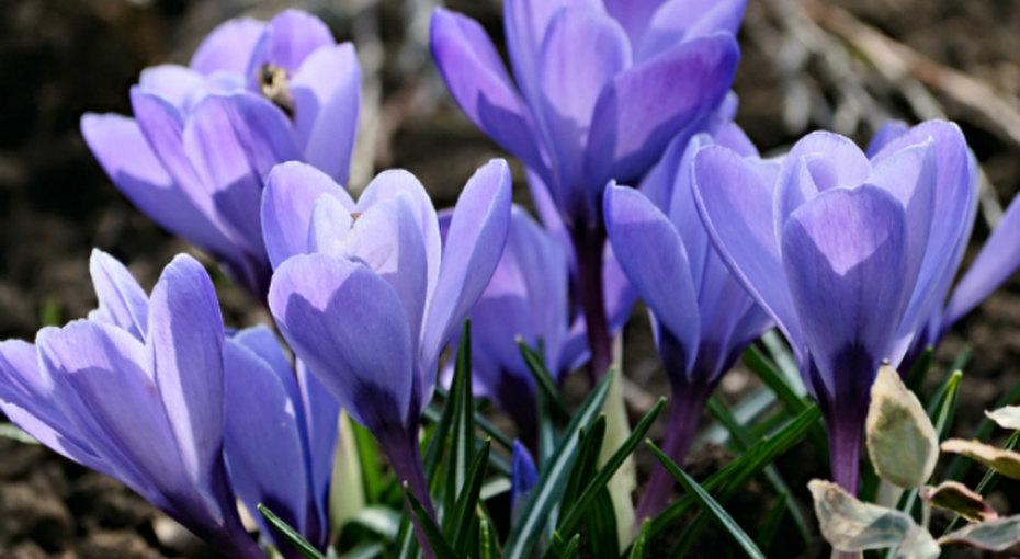 Многолетние цветы длядачи насевере
