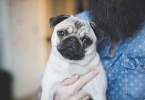 Как сделать удачное фото вашей собаки