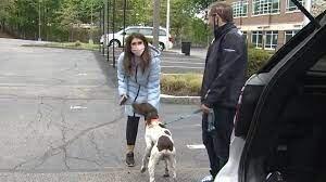журналистка разоблачила похитителя собаки
