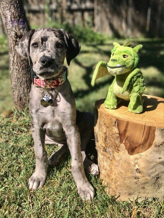 Эллиот со своим лучшим другом - дракончиком