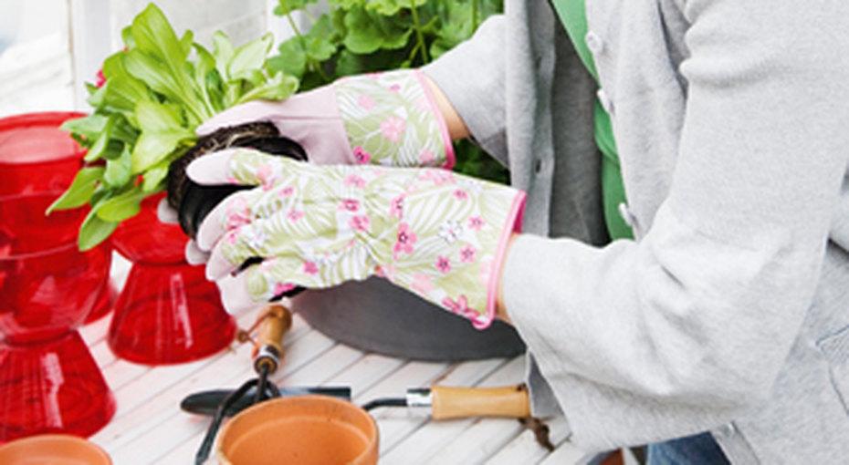 Для начинающих садоводов