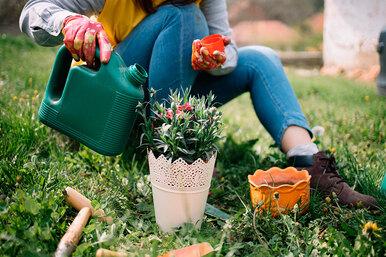 Как неотравиться, подкармливая растения надаче