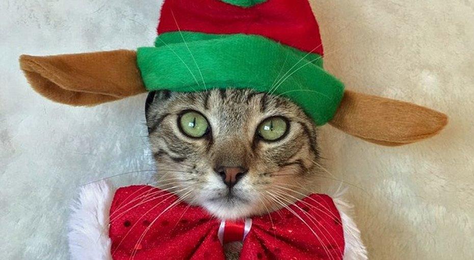 Смешные фотографии котов взабавных рождественских костюмах покорили Сеть