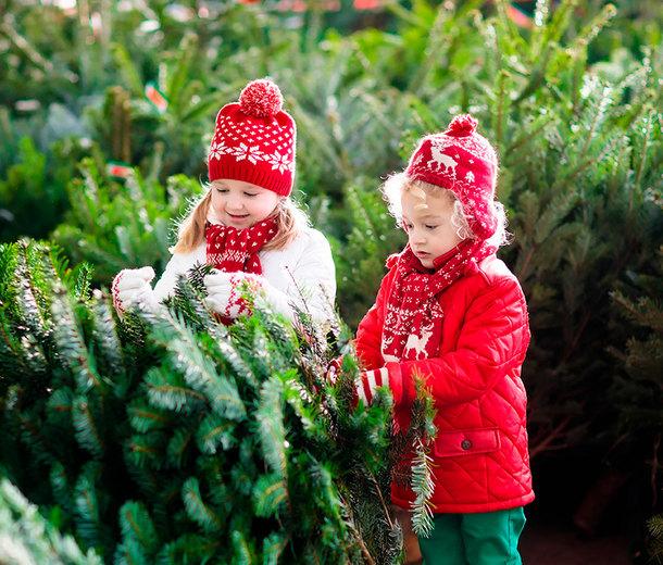 Как выбрать новогоднее дерево, которое непридется выбрасывать после праздника?