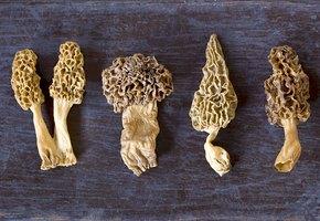 Как готовить самые вкусные грибы весны — сморчки и строчки?