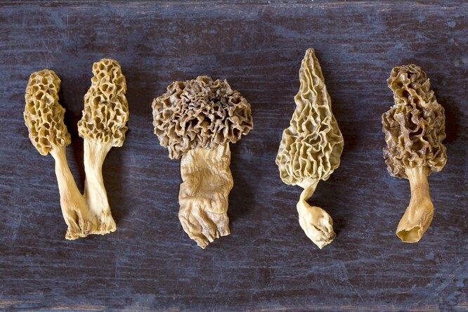 Как готовить самые вкусные грибы весны — сморчки истрочки?