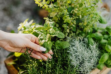 8 растений-репеллентов, которые прогонят комаров свашего участка