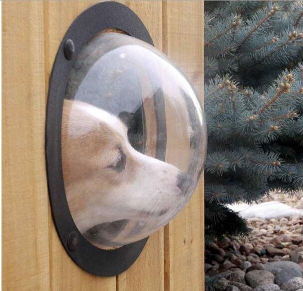 Окно в заборе для любопытных