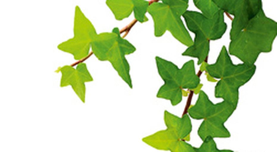 Растения слечебным эффектом