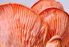 Кровавые грибы появились в Подмосковье
