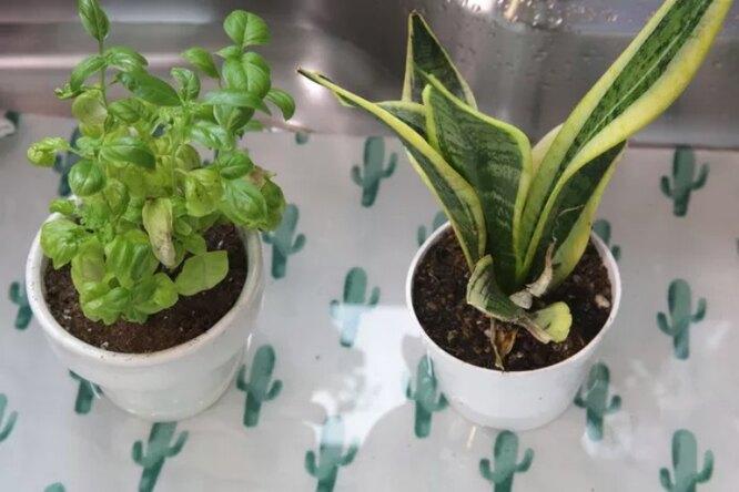 баня для растений, домашние цветы