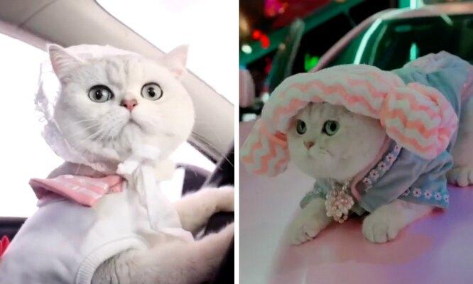 наряд для кота