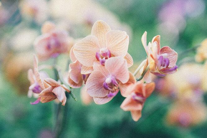 Что делать, если орхидея не цветет?