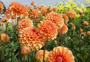 30 очаровательных цветов, которые украсят ваш сад осенью