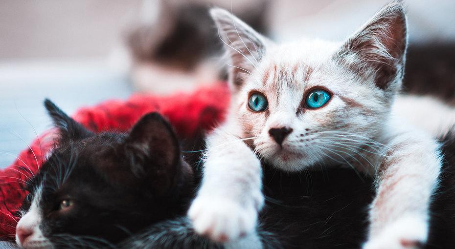 Котоангелы: 5 реальных случаев, когда кошки спасли жизнь человеку