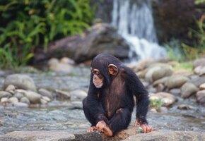 Пара спасла новорожденную обезьянку, ставшую сиротой. Их встреча трогает до слез