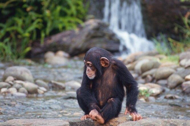 Пара спасла новорожденную обезьянку, ставшую сиротой. Их встреча трогает дослез