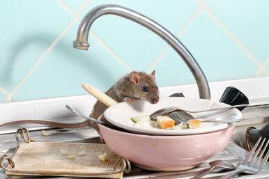 Как понять, что ввашем доме есть мыши: 6 признаков