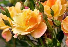Что расскажет о вас ваш любимый цветок? 10 типов женских характеров