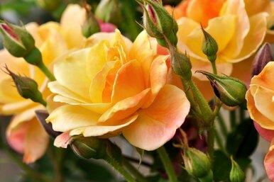 Что расскажет овас ваш любимый цветок? 10 типов женских характеров