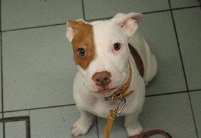 Глухого щенка пять раз возвращали в приют. Но он научился «общаться» и нашел дом