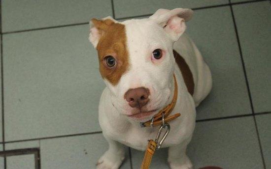 Глухого щенка пять раз возвращали вприют. Но он научился «общаться» инашел дом