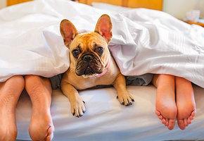 В постели с мужем: 28 приятных открытий, которые делают секс лучше