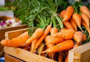 Как вырастить красивую ровную морковь? 7 очень простых секретов
