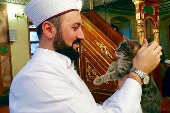 Имам открыл двери мечети бездомной кошке: ей понравилось, иона привела котят