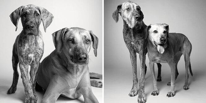 Кейден и Броди: 11 месяцев и 5 лет, затем 7 и 12 лет