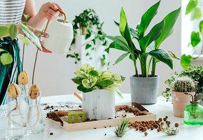 6 проблем, о которых листья ваших комнатных растений давно вам пытаются сказать