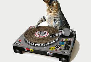 20 лайфхаков для любителей кошек