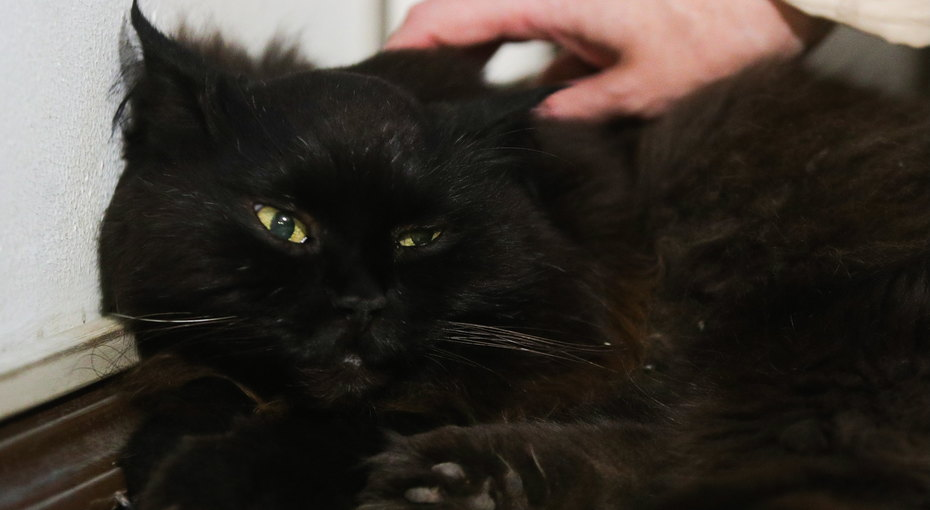 Девушка случайно нашла своего кота, которого искала пять лет